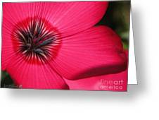 Scarlet Flax Greeting Card