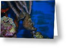 Seahorse And Coral Greeting Card