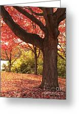 Shading Autumn Greeting Card