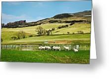 Sheep In Meadow Greeting Card