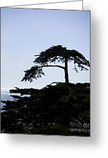 Silhouette Of Monterey Cypress Tree Greeting Card