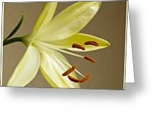 Simple Lily Greeting Card