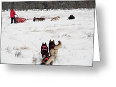 Sled Dog Greeting Card