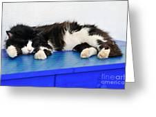 Sleeping Cat In Sifnos Island Greeting Card