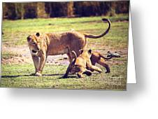 Small Lion Cubs With Mother. Tanzania Greeting Card