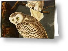 Snowy Owl Greeting Card by Celestial Images