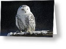 Snowy Owl On A Twilight Winter Night Greeting Card
