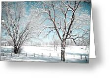 Snowy Trees On The Erie Canal Greeting Card