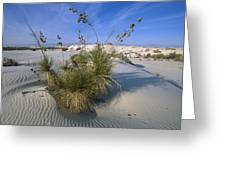 Soaptree Yucca In Gypsum Dunes White Greeting Card