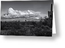 Sonoran Desert In Black And White  Greeting Card