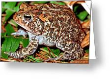 Southern Toad Bufo Terrestris Greeting Card