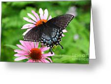 Spicebush Swallowtail Butterfly Greeting Card