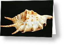 Spider Conch Greeting Card