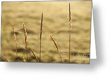 Spider Webs In Field On Tall Grass Greeting Card