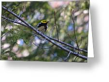 Spring Black-throated Green Warbler Greeting Card