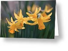 Spring Sunshine Greeting Card