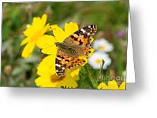 Springtime In Hydra Island Greeting Card