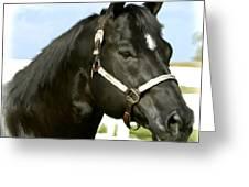 Stallion Greeting Card by Paul Tagliamonte