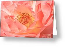 Stockton Rose Greeting Card