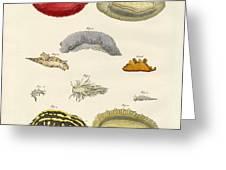 Strange Molluscs Greeting Card