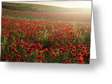Stunning Poppy Field Landscape Under Summer Sunset Sky Greeting Card