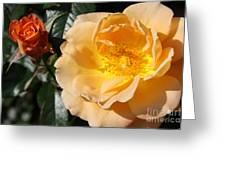 Summer's  Rose Love Greeting Card