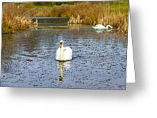 Swan In River In An  English Countryside Scene On A Cold Winter  Greeting Card