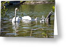 Swan With Signets Greeting Card