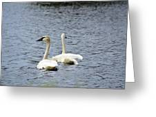 2 Swans Greeting Card