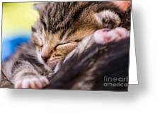 Sweet Small Kitten  Greeting Card