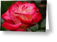 Tender Love Greeting Card