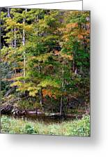Tennessee Autumn Stream Greeting Card