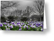 The Color Purple Greeting Card