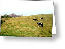 The Cows Of Dunnottar Castle Greeting Card