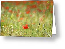 The First Poppy Of The Field Greeting Card