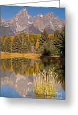 The Grand Tetons Schwabacher Landing Grand Teton National Park Greeting Card