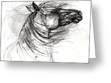 The Horse Sketch Greeting Card