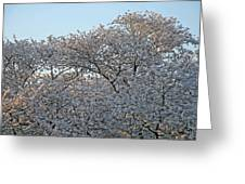 The Simple Elegance Of Cherry Blossom Trees Greeting Card