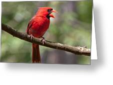 The Singing Cardinal Greeting Card