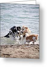 Three Dogs Playing On Beach Greeting Card