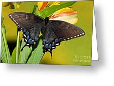 Tiger Swallowtail Butterfly, Dark Phase Greeting Card
