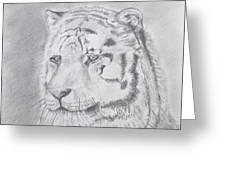 Tiger Watching Greeting Card