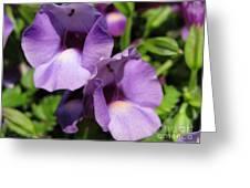 Torenia Named Purple Moon Greeting Card