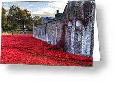 Tower Of London Poppies Greeting Card