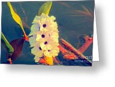 Transpantaneira Greeting Card
