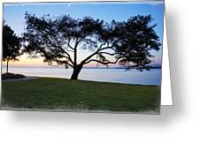 Tree By The Bay Greeting Card