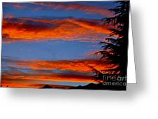 Tree In Sunset Greeting Card