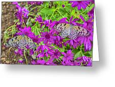 2 Tree Nymph Butterflies Greeting Card
