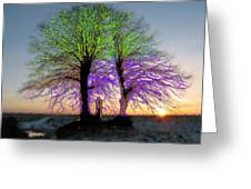 Trees Aglow Greeting Card