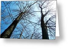 2 Trees Greeting Card